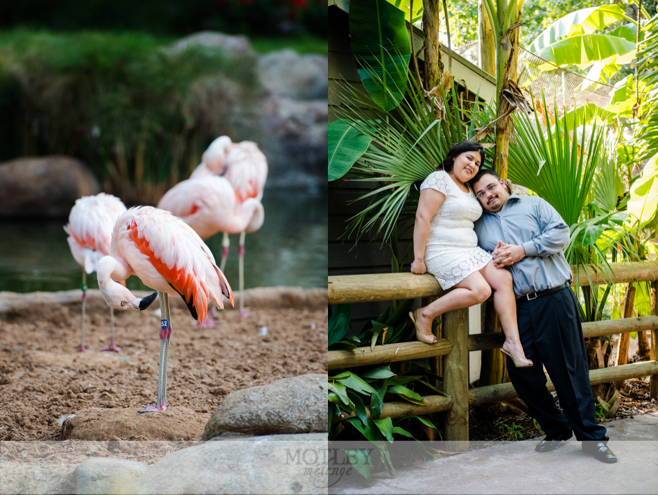 houston-zoo-engagement-3