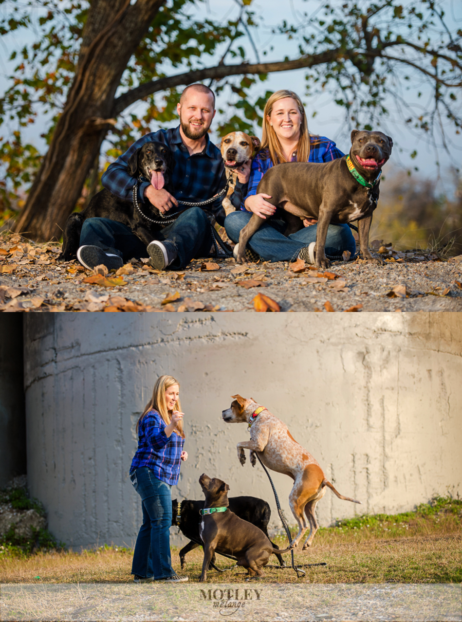 car-engagement-session-with-dogs